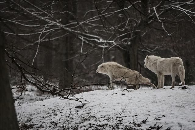 wolves-8211-selena-gomez-amp-marshmelloacoustic-cover.jpg