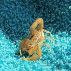 scorpions-led-zeppelin-bon-jovi-u2-aerosmith-8211-best-slow-rock-love-songs-nonstop.jpg